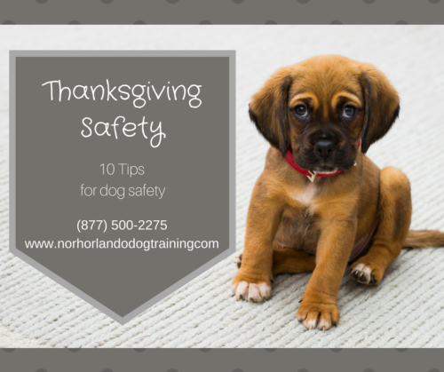 Thanksgiving Dog Safety